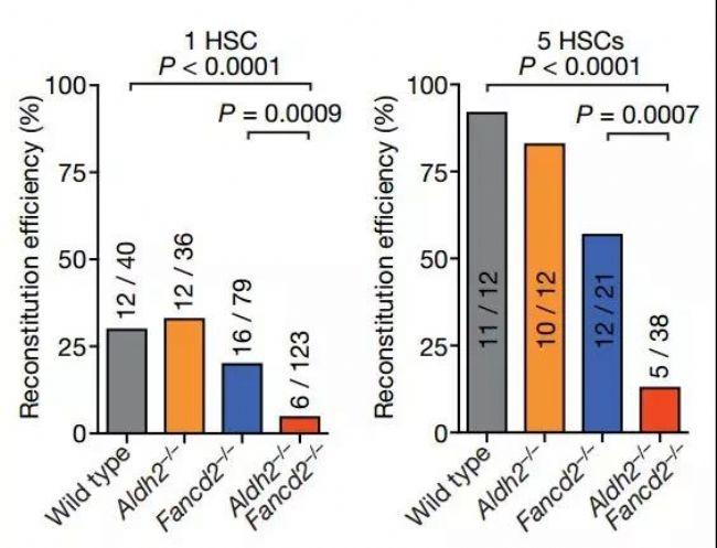 《自然》:真的别喝了!科学家证实酒精会给干细胞DNA造成永久性伤害,提高多种癌症风险_|_科学大发现